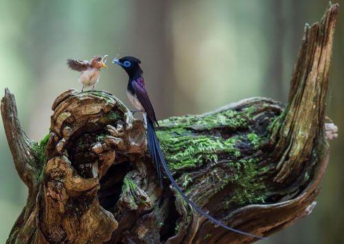 Foto Burung Merawat Anaknya 1