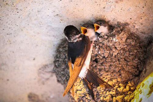 Foto Burung Merawat Anaknya 11