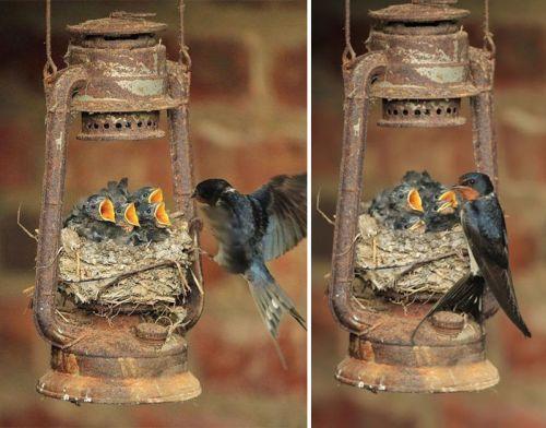 Foto Burung Merawat Anaknya 12