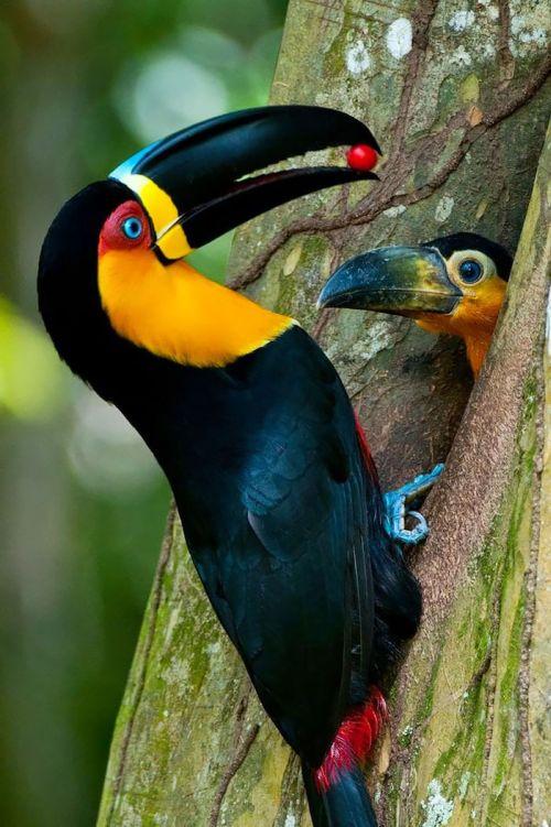 Foto Burung Merawat Anaknya 13