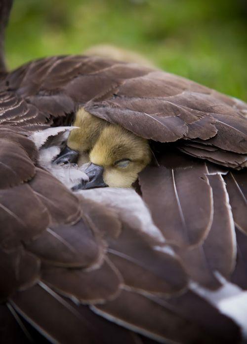Foto Burung Merawat Anaknya 14