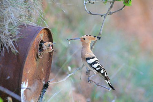 Foto Burung Merawat Anaknya 16