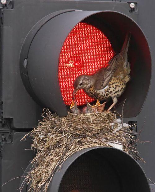 Foto Burung Merawat Anaknya 17