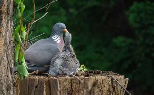 Foto Burung Merawat Anaknya 18