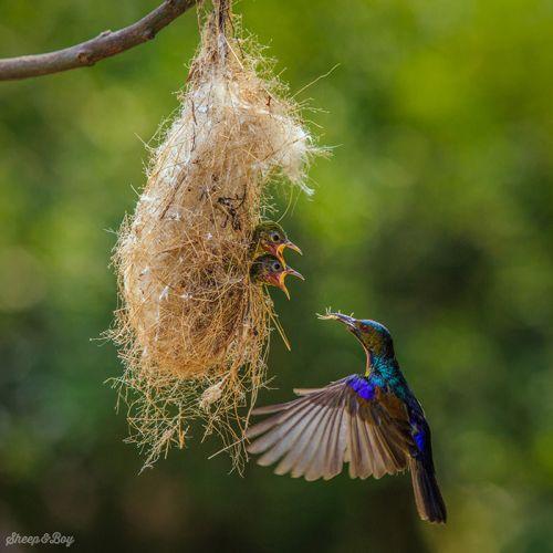Foto Burung Merawat Anaknya 19