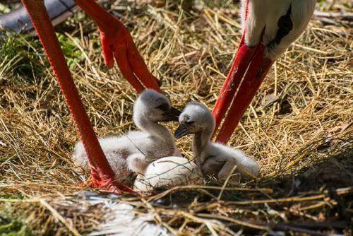 Foto Burung Merawat Anaknya 20