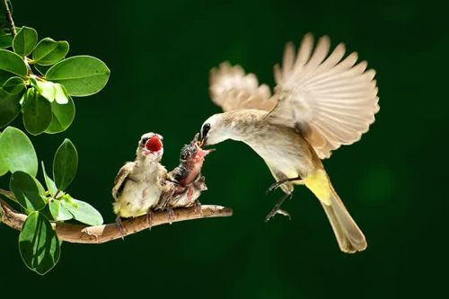 Foto Burung Merawat Anaknya 21