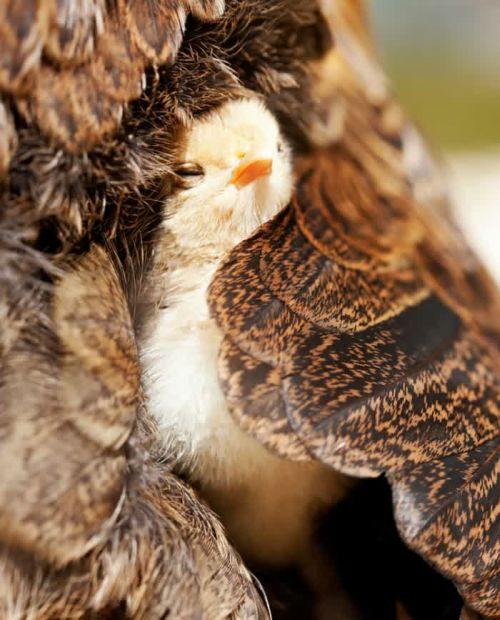 Foto Burung Merawat Anaknya 23