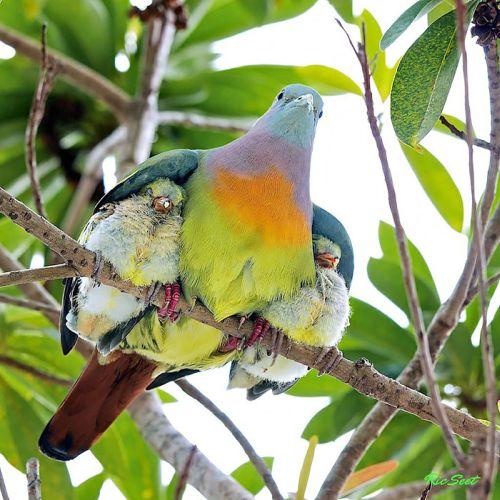 Foto Burung Merawat Anaknya 3