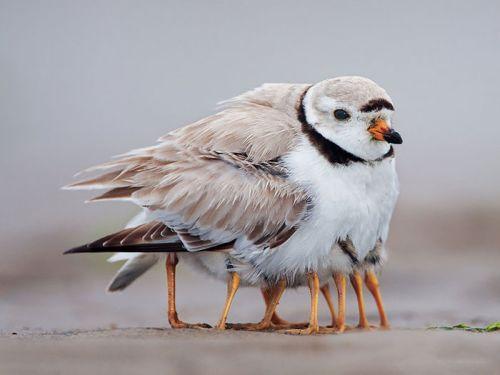 Foto Burung Merawat Anaknya 4