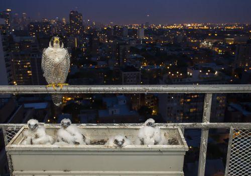 Foto Burung Merawat Anaknya 7