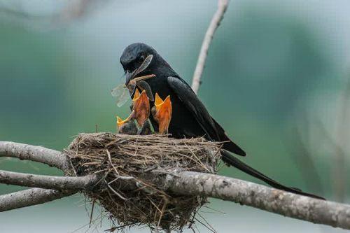 Foto Burung Merawat Anaknya 8
