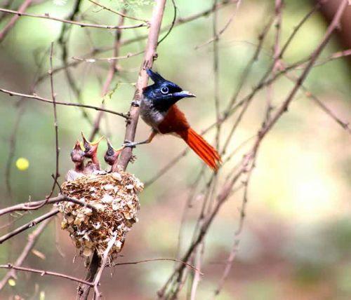 Foto Burung Merawat Anaknya 9