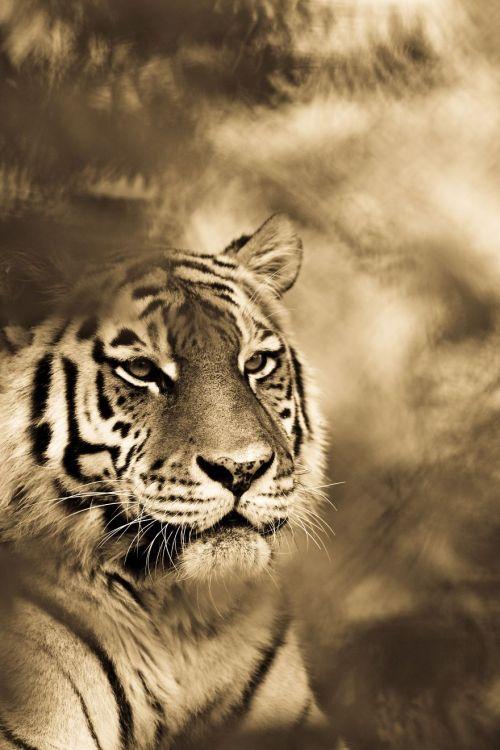 Foto Kucing Besar 12