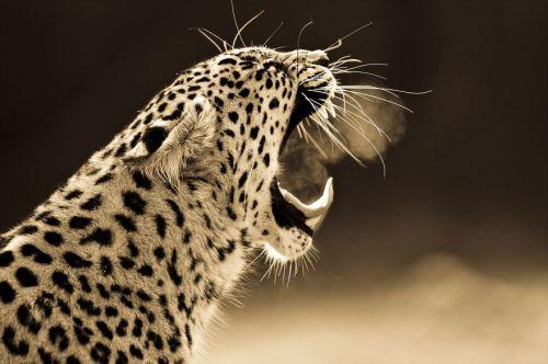 Foto Kucing Besar 5