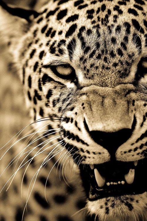 Foto Kucing Besar 6
