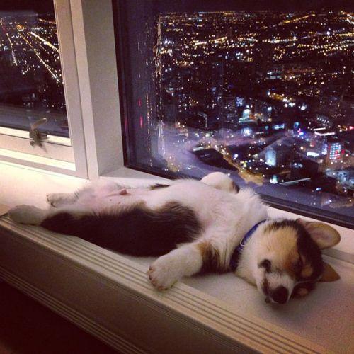 Foto Lucu Binatang Sedang Tidur Sembarangan 1