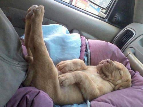 Foto Lucu Binatang Sedang Tidur Sembarangan 10