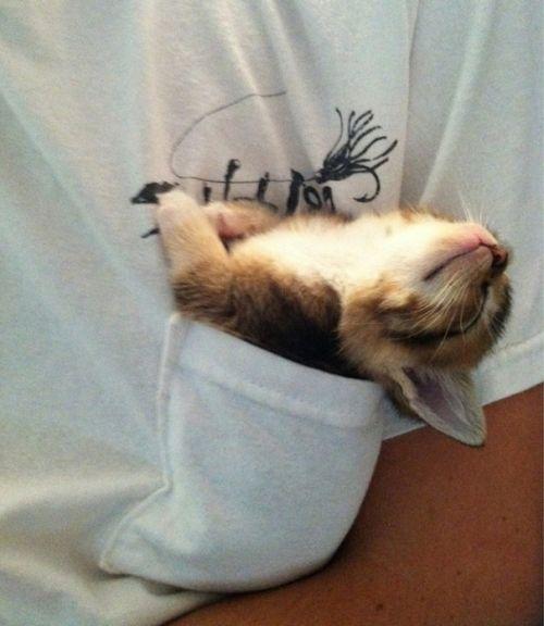Foto Lucu Binatang Sedang Tidur Sembarangan 12