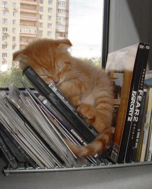 Foto Lucu Binatang Sedang Tidur Sembarangan 19