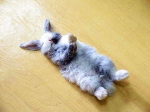 Foto Lucu Binatang Sedang Tidur Sembarangan 2