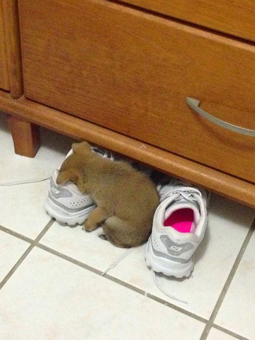 Foto Lucu Binatang Sedang Tidur Sembarangan 3