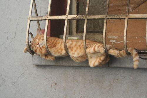 Foto Lucu Binatang Sedang Tidur Sembarangan 30