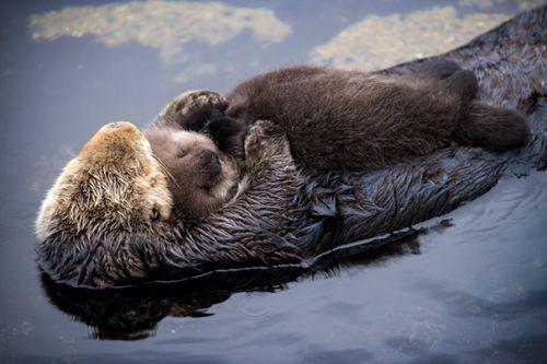 Foto Lucu Binatang Sedang Tidur Sembarangan 31