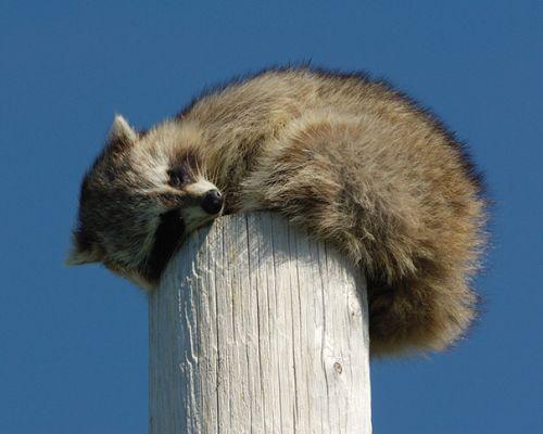 Foto Lucu Binatang Sedang Tidur Sembarangan 34