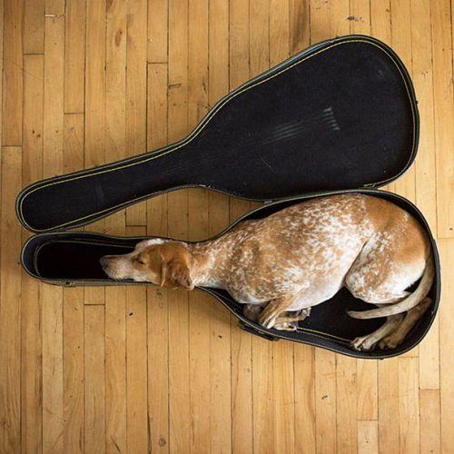 Foto Lucu Binatang Sedang Tidur Sembarangan 4