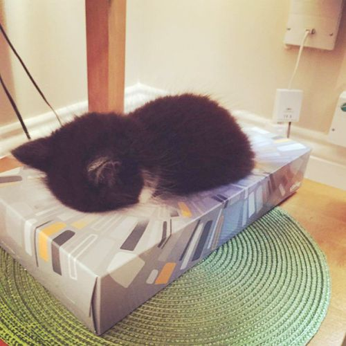 Foto Lucu Binatang Sedang Tidur Sembarangan 7