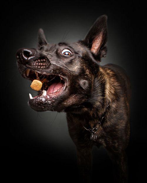 Foto Lucu Ekspresi Anjing Lapar 1