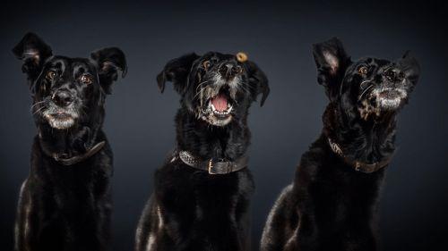 Foto Lucu Ekspresi Anjing Lapar 10