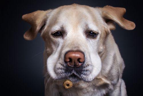 Foto Lucu Ekspresi Anjing Lapar 3