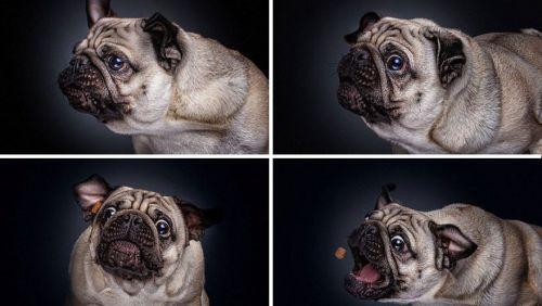 Foto Lucu Ekspresi Anjing Lapar 4
