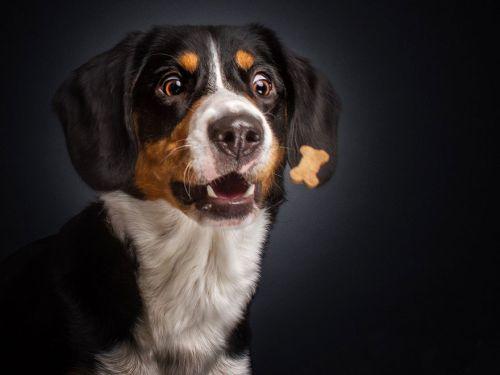 Foto Lucu Ekspresi Anjing Lapar 5