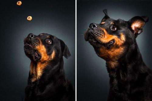 Foto Lucu Ekspresi Anjing Lapar 6