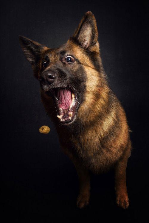 Foto Lucu Ekspresi Anjing Lapar 7