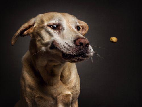 Foto Lucu Ekspresi Anjing Lapar 9