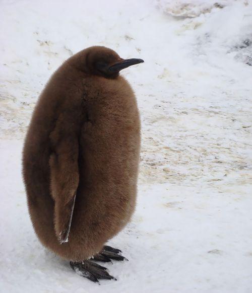 Fotografi Penguin Paling Bagus 18