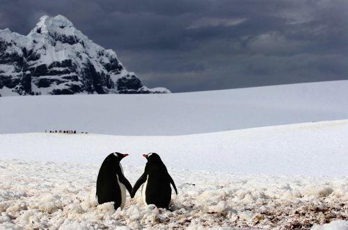 Fotografi Penguin Paling Bagus 19