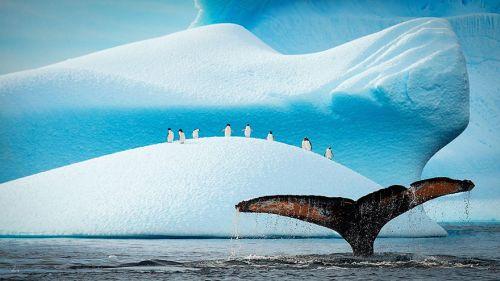 Fotografi Penguin Paling Bagus 2