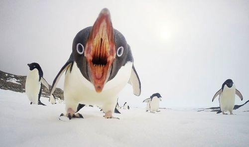 Fotografi Penguin Paling Bagus 20