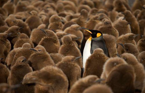 Fotografi Penguin Paling Bagus 4