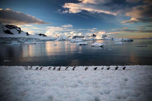 Fotografi Penguin Paling Bagus 5