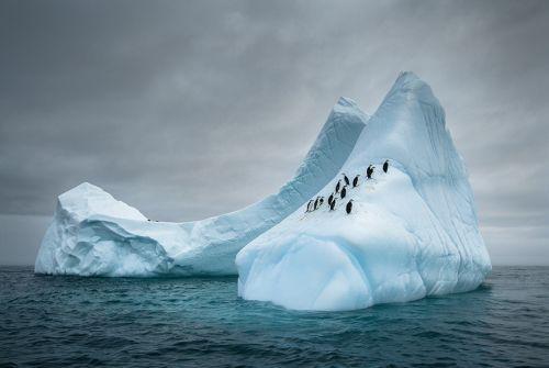 Fotografi Penguin Paling Bagus 6