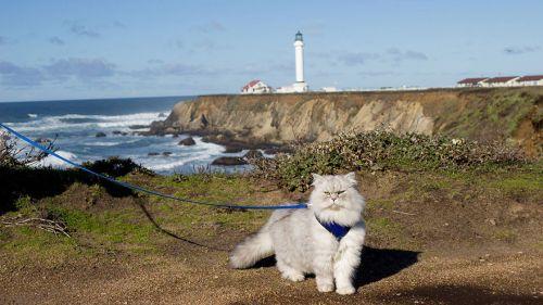 Gandalf Si Kucing Siberia yang Hobi Traveling 3
