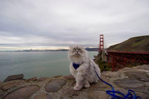 Gandalf Si Kucing Siberia yang Hobi Traveling 8