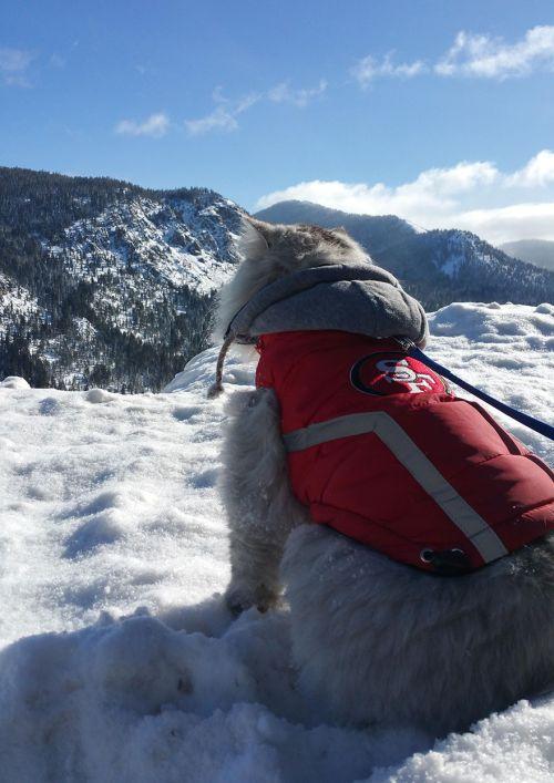 Gandalf Si Kucing Siberia yang Hobi Traveling 9