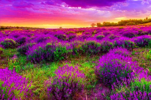 Gambar Pemandangan Indah di Dunia13